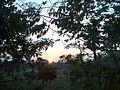 Sunset at my native - panoramio.jpg