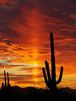 Light pillar - Image: Sunset in Saguaro National Park