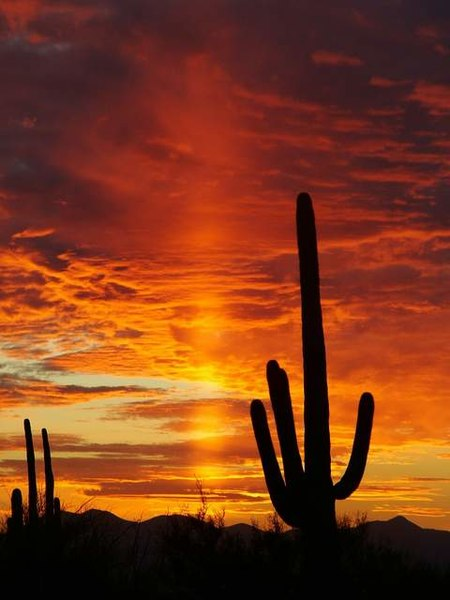[عکس: 450px-Sunset_in_Saguaro_National_Park.JPG]
