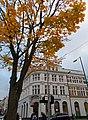 Sutton High Street trees (15).jpg