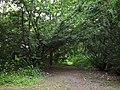 Syretsky arboretum 6.JPG