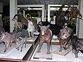 T.Ivanausko zoologijos muziejus, 5 2006-12-02.jpg