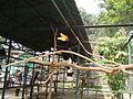 Taman Hewan Pematang Siantar (26).JPG