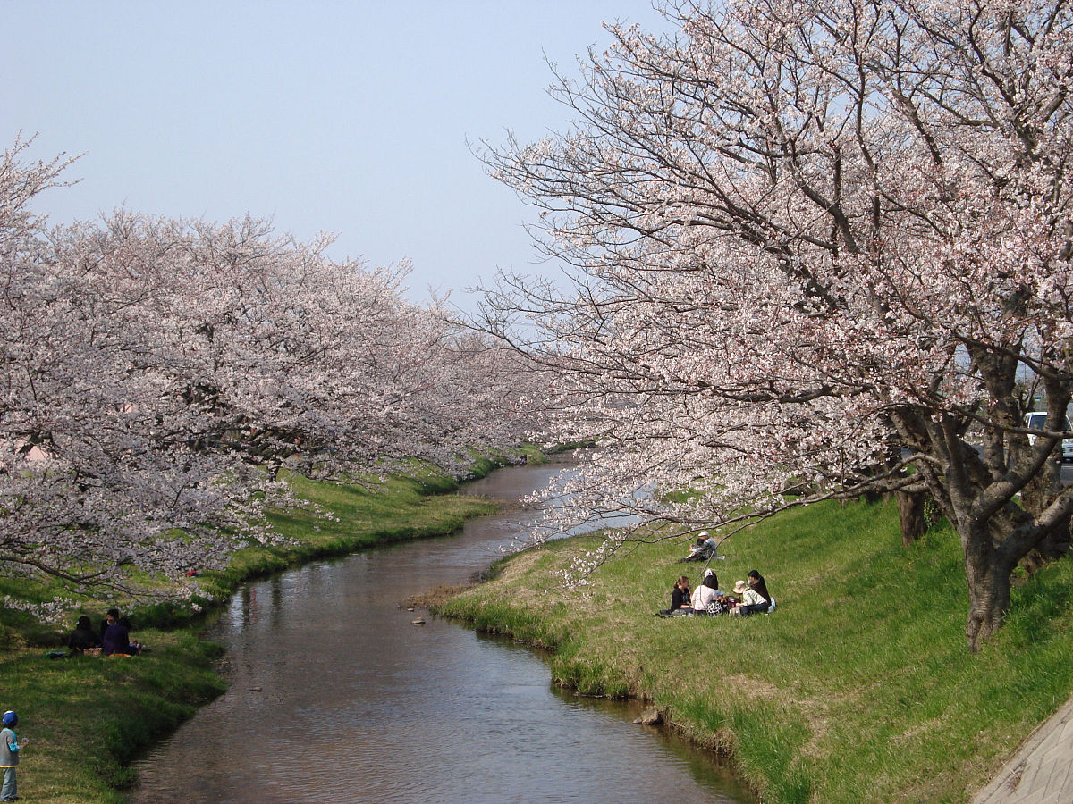 Tamatsukuri Onsen - Cherry Blossom by the river1.jpg