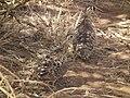 Tanzania 0610 Nevit.jpg