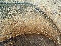 Tell Megiddo Preservation 2009 017.JPG