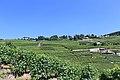 Terrasses de Lavaux - panoramio (39).jpg