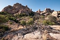 Texas Canyon AZ.jpg