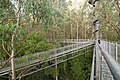 The 30m high structure of The Treetop Walk (19361007886).jpg
