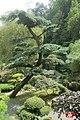 The Japanese garden, Jarków (32019745911).jpg