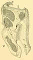 The Osteology of the Reptiles-105 d34567ytyy.png