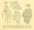 The Osteology of the Reptiles-211 jhgf frty.png