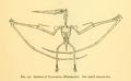 The Osteology of the Reptiles-317 hbhb jhbhjn h.png