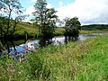 The River Ayr - geograph.org.uk - 519649.jpg