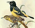 The birds of California (Plate 1) (7699523740) 2.jpg