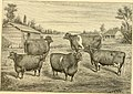 The breeds of live stock, and the principles of heredity (1887) (14594600628).jpg