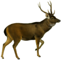 The deer of all lands (1898) Indian sambar white background.png