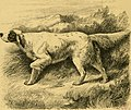 The dogs of the British Islands, being a series of articles on the points of their various breeds, and the treatment of the diseases to which they are subject (1878) (20802483589).jpg