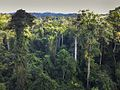 The forest from Canopy Walkway - Kakum NP - Ghana14 IMG 0810 (16010856787).jpg
