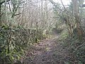 The path through the woods - geograph.org.uk - 662065.jpg