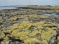 The rocks at Longstone - geograph.org.uk - 316272.jpg