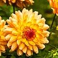 Thuya Gardens (15631429130).jpg