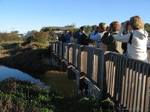 Tijuana Slough NWR birding (5121522428)