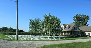 Toilet papering - A toilet papered residence Deerfield, Michigan