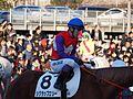 Tokyo Daishoten Day at Oi racecourse (31866296531).jpg