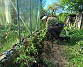 Tomato planting.jpg