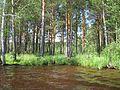 Tomsky District, Tomsk Oblast, Russia - panoramio (192).jpg