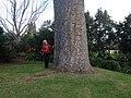 Toowoomba Botanic Gardens 08.JPG