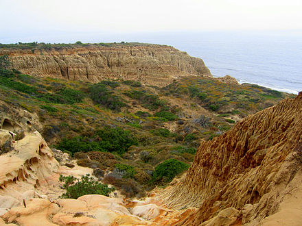 Coastal canyon in Torrey Pines State Reserve Torrey Pines State Park Valley.jpg