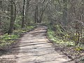 Track going East - corner of Cannocks-Newton Wood - geograph.org.uk - 369168.jpg