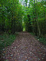 Track through Millbank Wood - geograph.org.uk - 596314.jpg