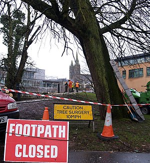 English: Tree Surgery, Omagh I was driving by ...