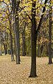 Trees (266587292).jpg