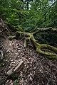 Trees Neroberg.jpg