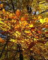 Trees at Pass of Killiecrankie - geograph.org.uk - 637792.jpg