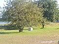 Trees in Slite, Gotland, Sweden.jpg