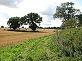 Trees in harvested fields - geograph.org.uk - 1452969.jpg