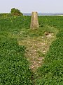 Triangulation pillar on Sutton Down - geograph.org.uk - 437809.jpg