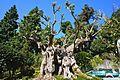 Tropischer Garten - Jardim Tropical Monte Palace - panoramio.jpg