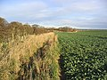 Turnip field and set aside strip - geograph.org.uk - 322617.jpg