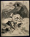 Two St. Bernard dogs find a lost unconscious figure in the s Wellcome V0015200.jpg
