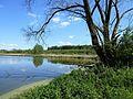 Uferbereich des Lettenweiher.jpg