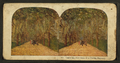 Under the live oaks of a Florida Highway, from Robert N. Dennis collection of stereoscopic views 7.png