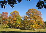 File:United colors of Autumn (6272052289).jpg