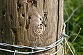 Unremarkable knot - but look inside - geograph.org.uk - 821397.jpg