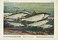 Unsere Süßwasserfische (Tafel 22) (6102600475).jpg